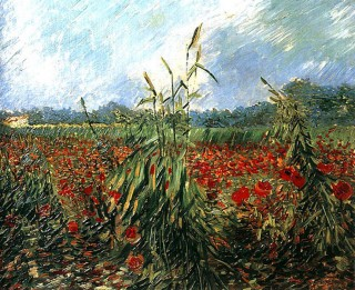 Van Gogh - Campo con papaveri