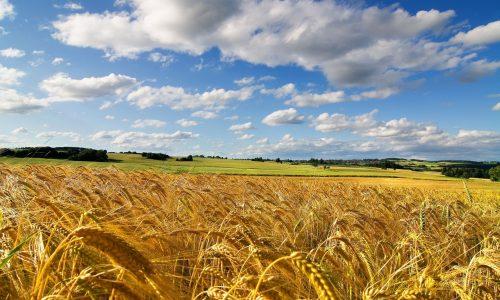 Il seminatore di grano – 2. Vecchi ricordi