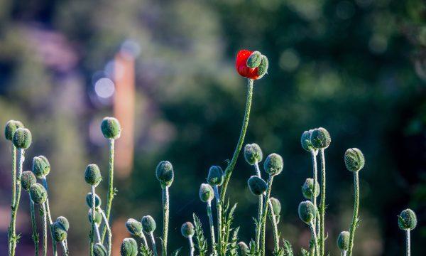 Il seminatore di grano – 13. Un messaggio importante
