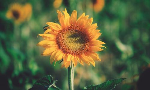 Il seminatore di grano – 17. I sentimenti delle cose