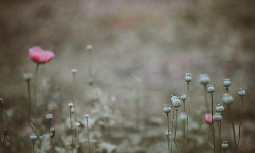Il seminatore di grano – 21. Il profumo dei fiori
